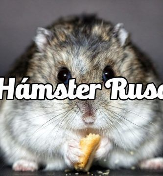 RoedoreS: Hámster Ruso